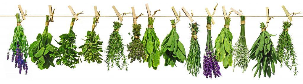 Botanicals für Gin